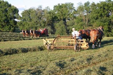 Amish-country farming